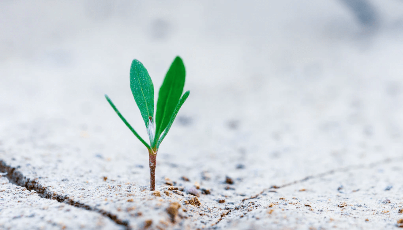 BLOG: the importance of building a resilient food system amid COVID19