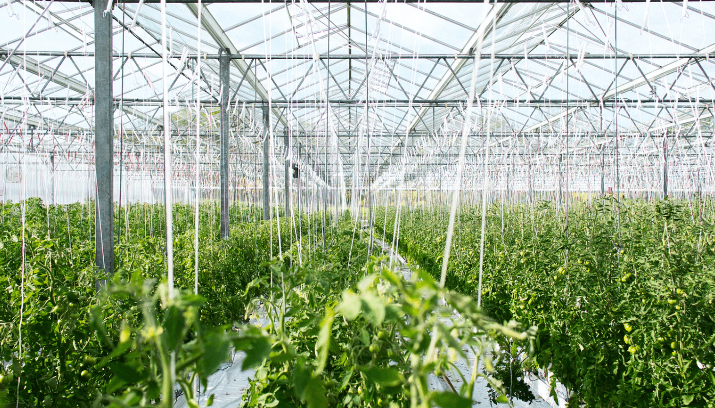 Building a more resilient ecosystem: farming as the new foodtech revolution