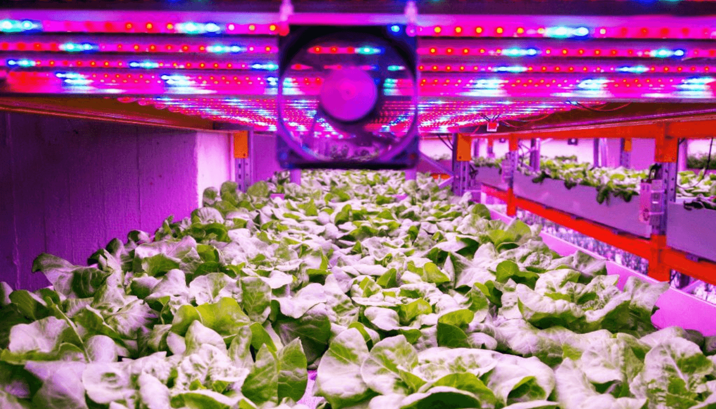 Vertical farming: shaping the next generation food supply